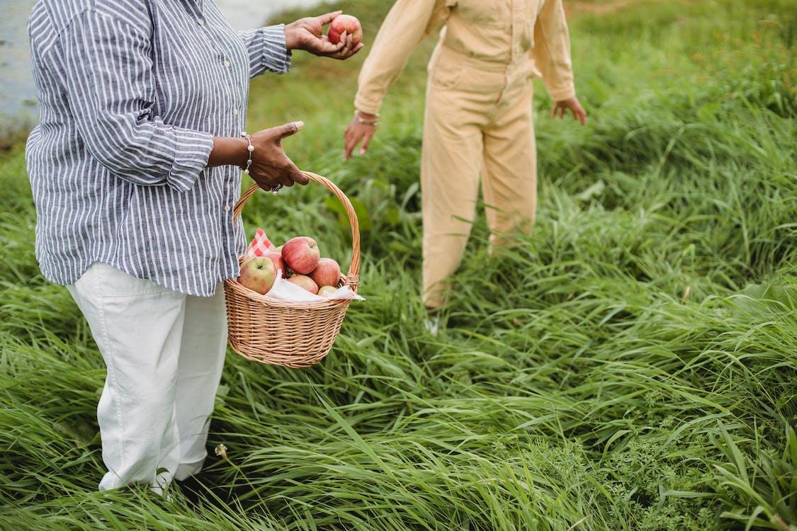 Etniczni Rolnicy Bez Twarzy Z Dojrzałymi Jabłkami W Koszu Na Gruntach Uprawnych
