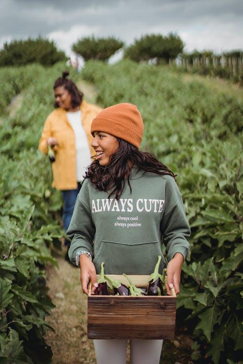 콘텐츠 민족 소녀와 어머니는 농지에 가지를 수집