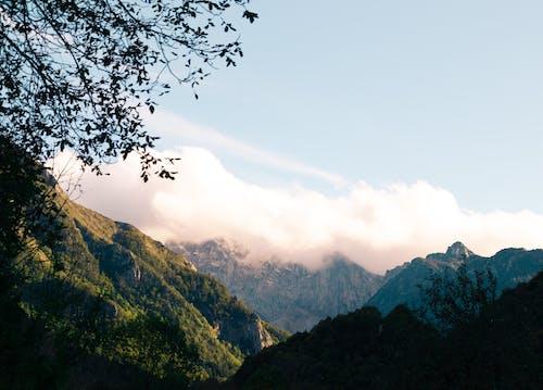 Foto d'estoc gratuïta de alba, alps, arbre