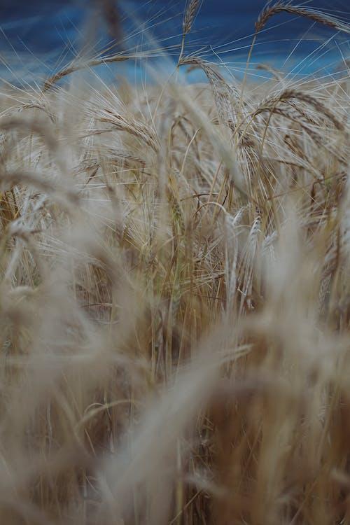 Photos gratuites de agriculture, automne, bio