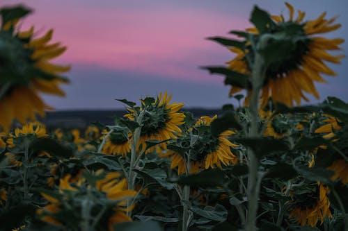 Photos gratuites de agriculture, bio, biologique
