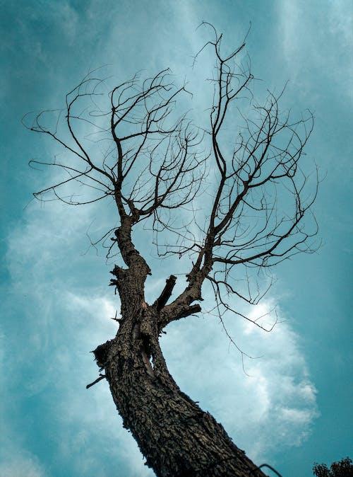 Foto profissional grátis de árvore, árvores sem folhas, céu azul, céu bonito