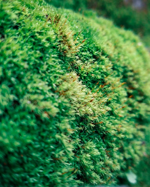 Foto profissional grátis de exuberante, exuberante verde, fotografia de pequenos seres, macro