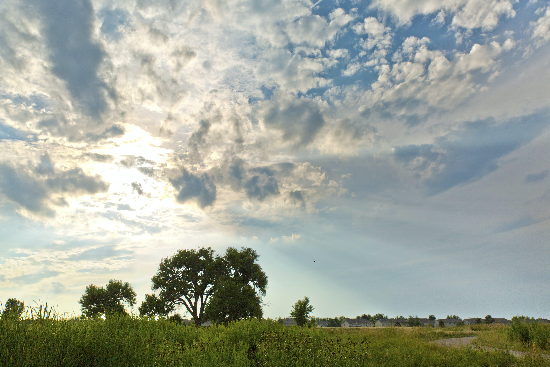 Δωρεάν στοκ φωτογραφιών με βοσκοτόπι, γαλάζιος ουρανός, γήπεδο, ηλιόλουστος ουρανός