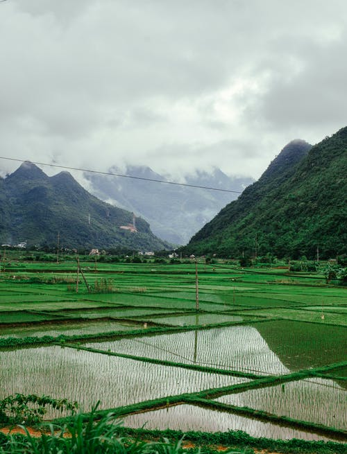 농경지, 농장, 농지의 무료 스톡 사진