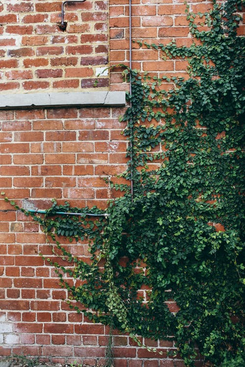 Green Plant Beside Brown Brick Wall