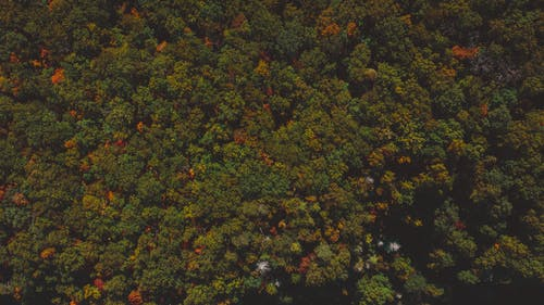 Aerial view of bright background of lush green trees growing in woods in fall