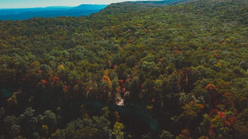 Scenery drone view of lush green woods on mounts under white sky in autumn