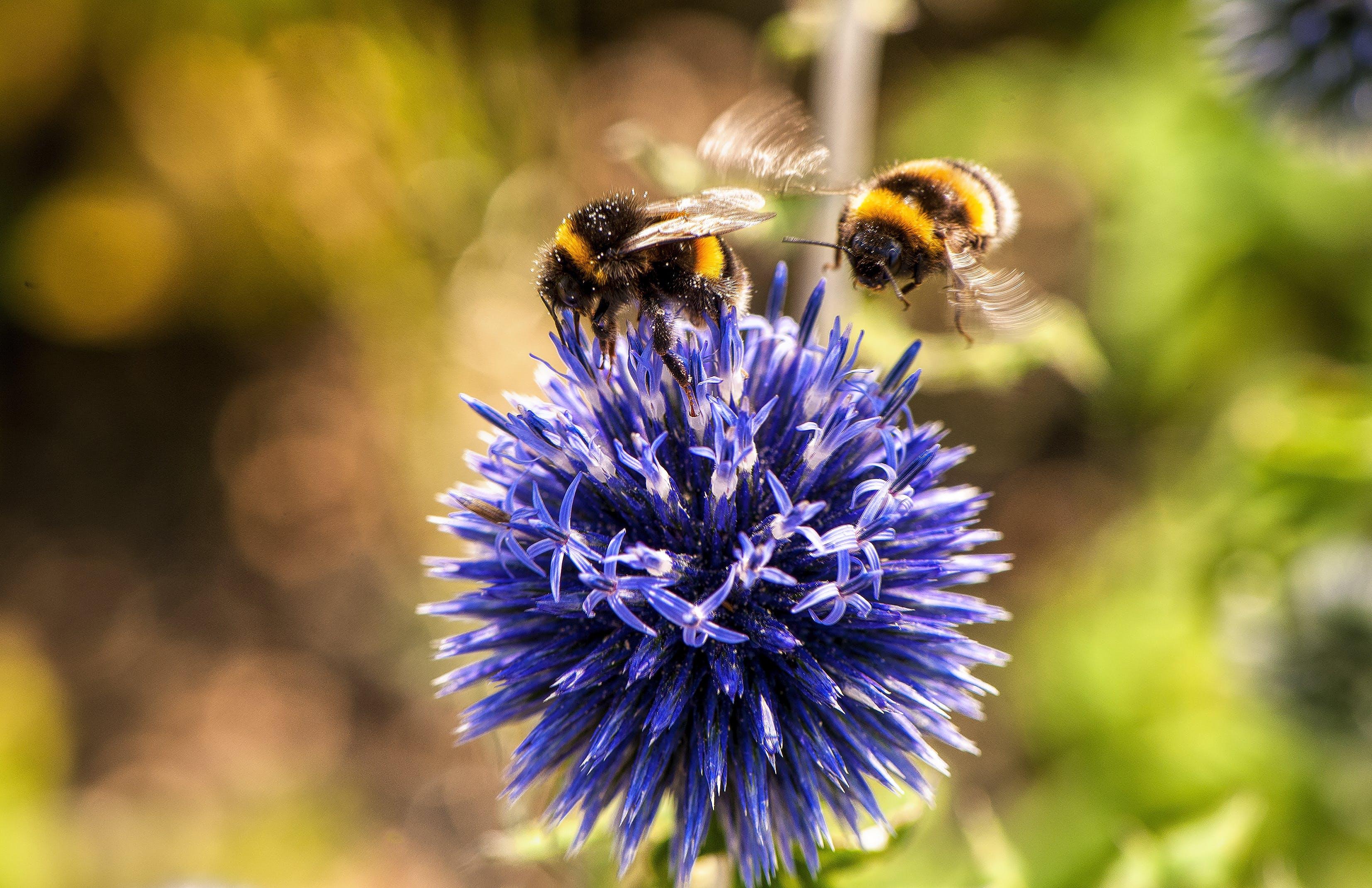 animal, bees, bloom