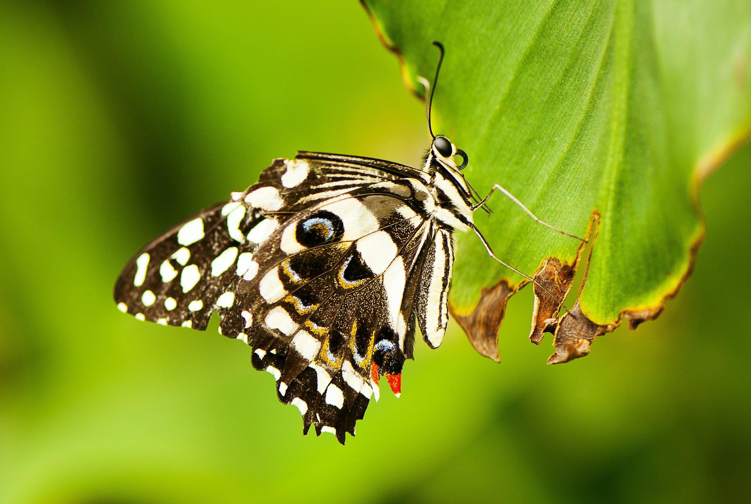 Δωρεάν στοκ φωτογραφιών με macro, έντομο, κοντινό πλάνο, πεταλούδα