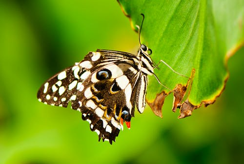 Free stock photo of butterfly, close-up, insect