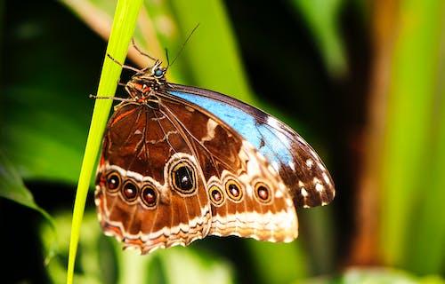 Kostenloses Stock Foto zu flügel, hell, hübsch, insekt