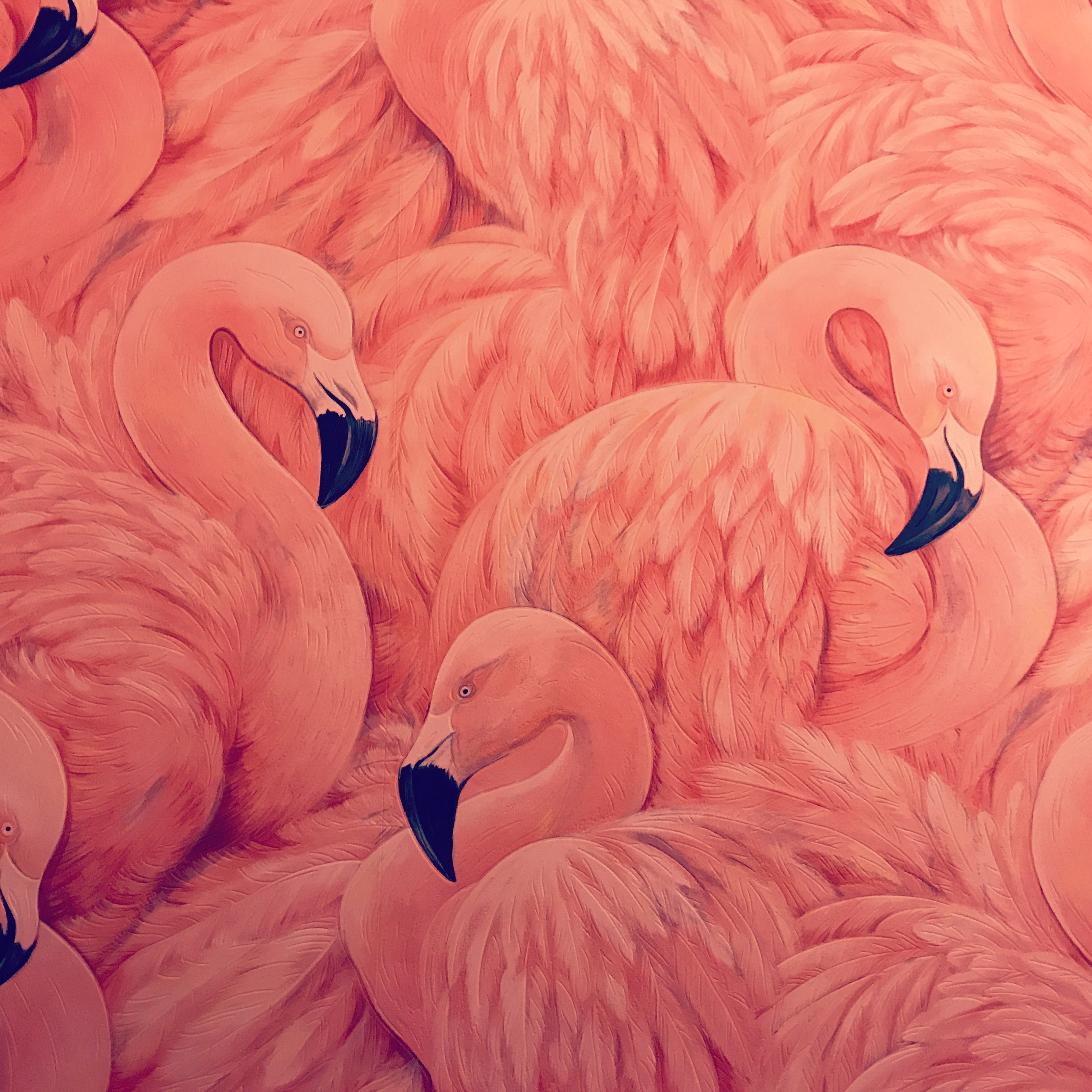 Free stock photo of decor, flamingo, interior, pink
