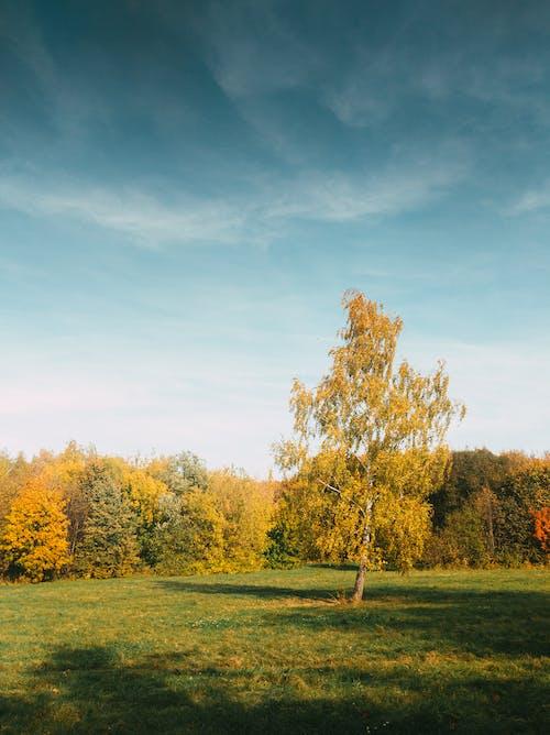 Kostenloses Stock Foto zu azurblauer himmel, bäume, gelb, grün