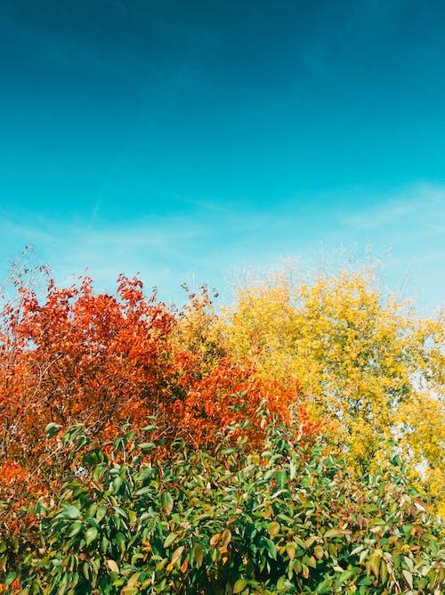Kostenloses Stock Foto zu blauer himmel, gelbe farbe, helle farben, herbstfarben