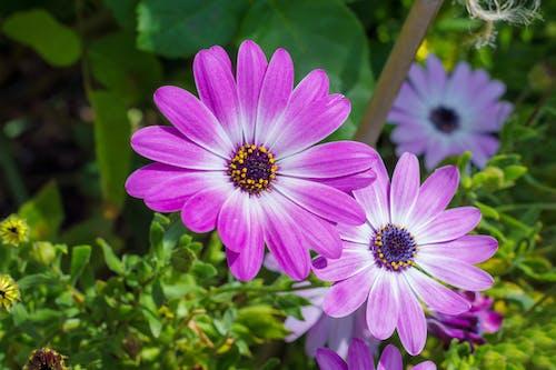 Free stock photo of beautiful, botanic garden, flowers