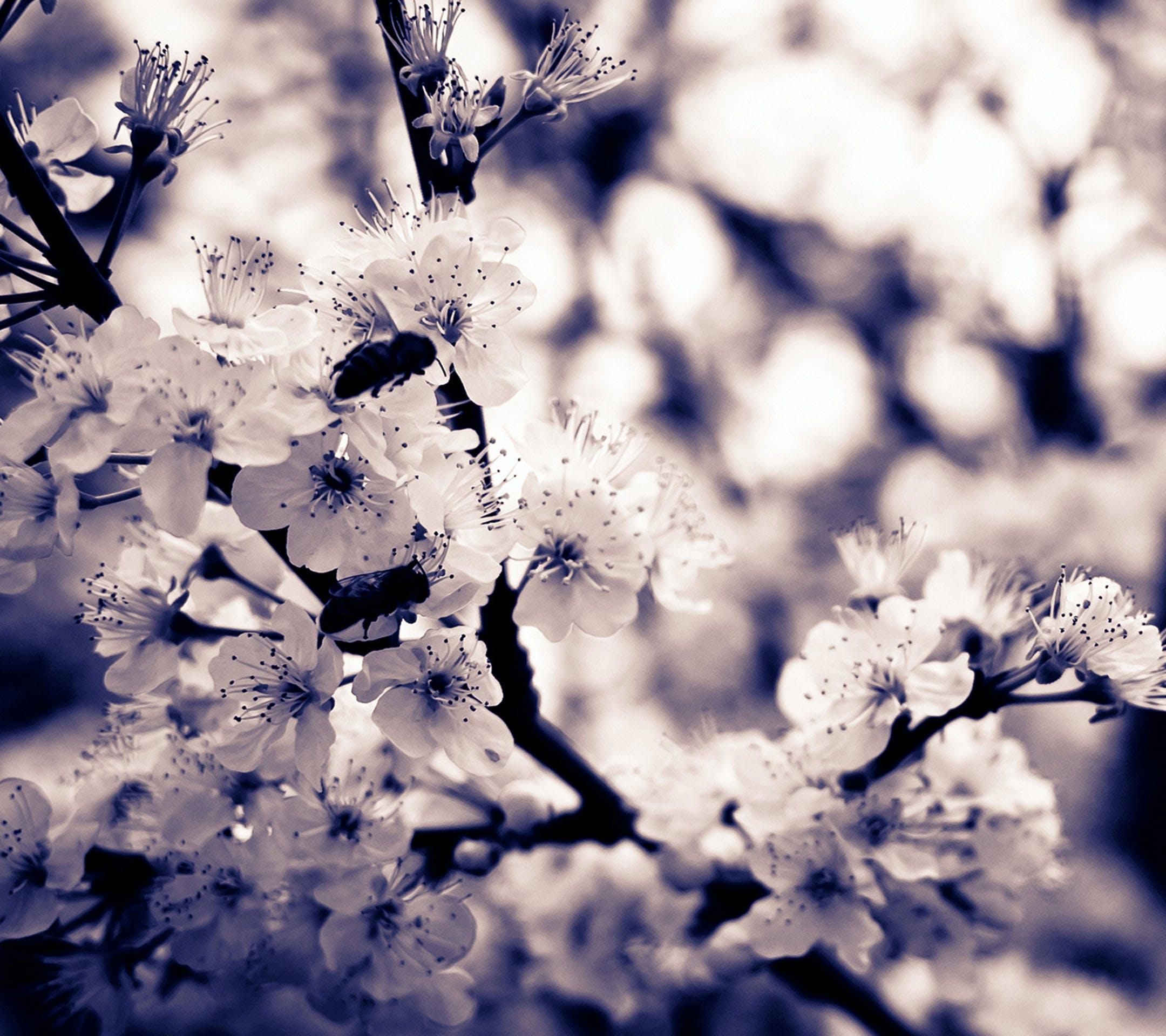 Základová fotografie zdarma na téma barvy, flóra, jasný, krásný