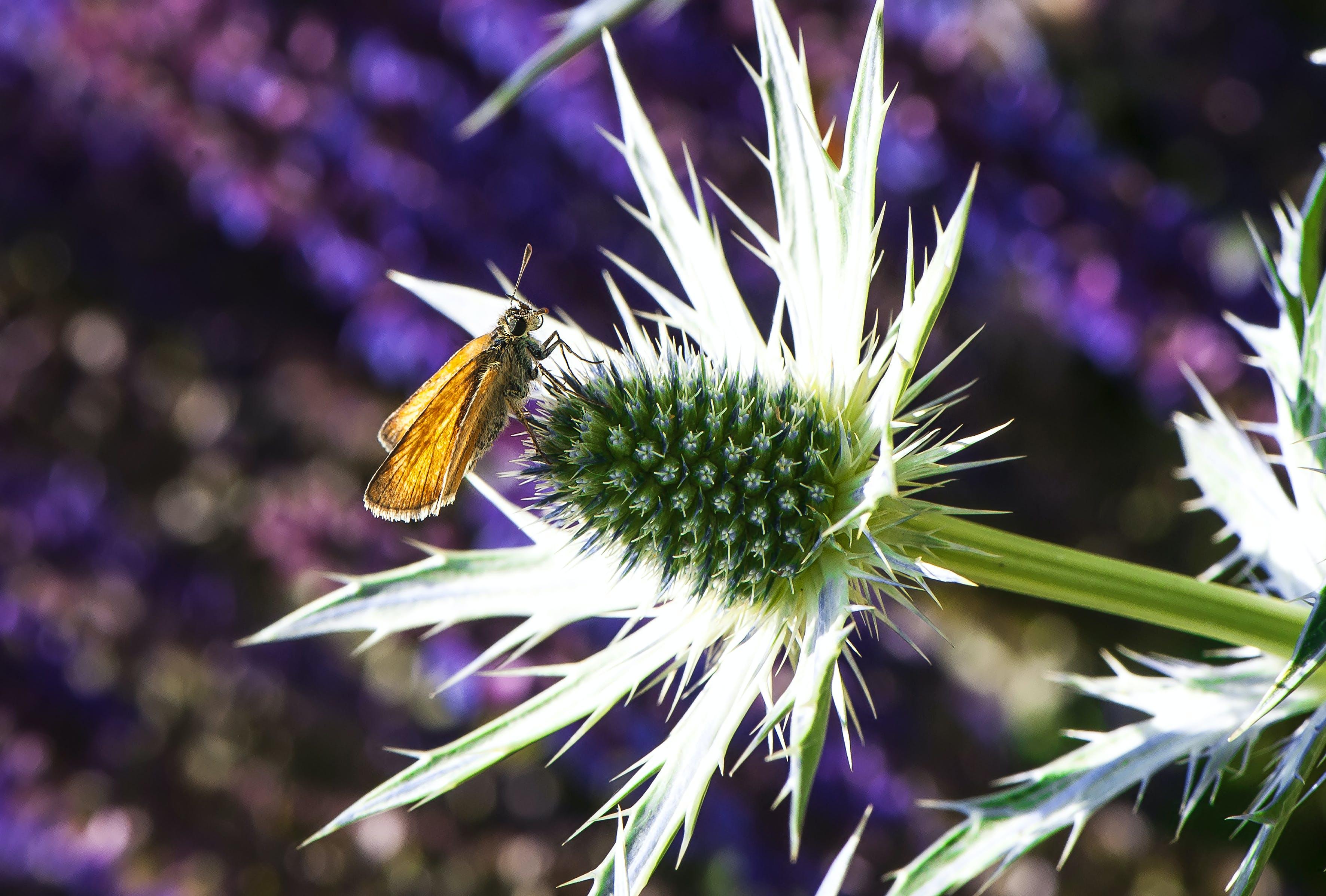 Foto stok gratis alam, berbayang, berbunga, berkembang