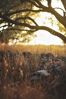 Free stock photo of sunset, field, holidays, summer