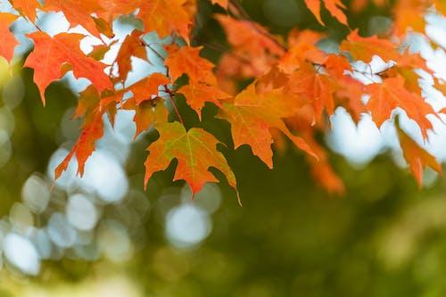 Free stock photo of 4k wallpaper, autumn, autumn color