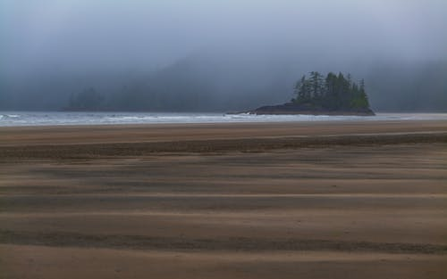 Green Trees on Brown Sand Near Body of Water