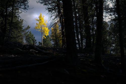 下落, 多雲的, 景觀 的 免费素材图片