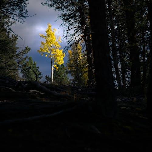 下落, 多雲的, 森林 的 免费素材图片