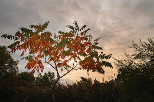 Free stock photo of 4k wallpaper, autumn, break of dawn