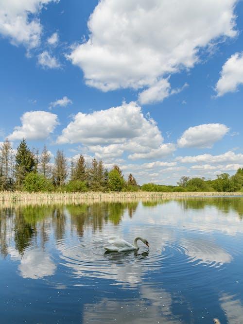 Kostenloses Stock Foto zu draußen, himmel, landschaft