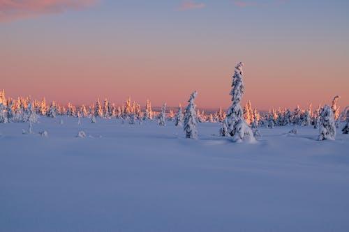Безкоштовне стокове фото на тему «enviremente, вічнозелений, гора»