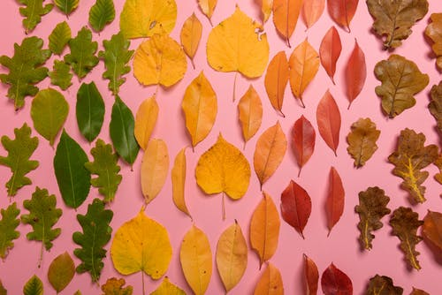 Autumn leaves on pink background