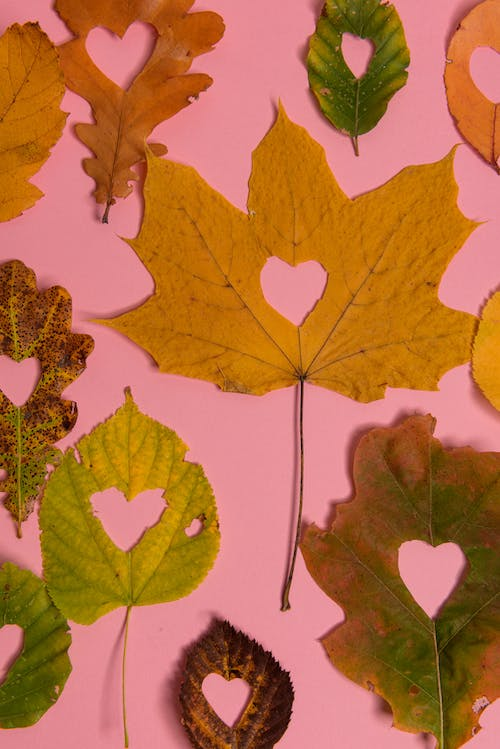 Leaves with hearts carved in middle