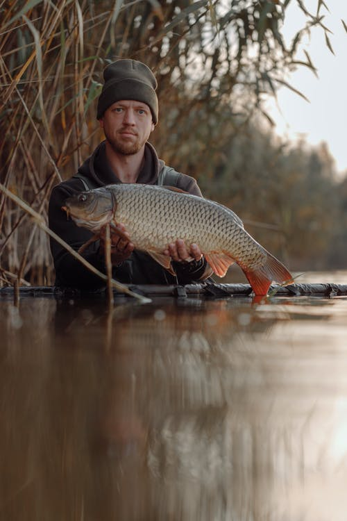Foto d'estoc gratuïta de carpa, home, peix