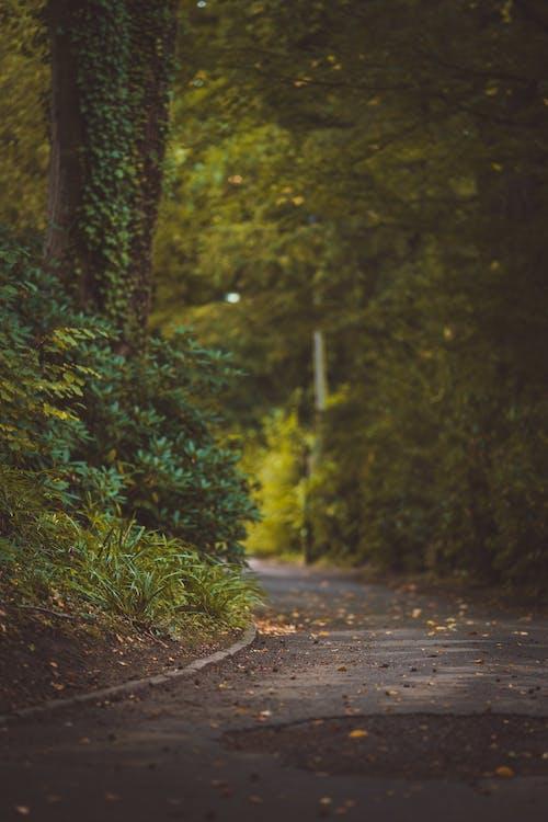 Ảnh lưu trữ miễn phí về cây, độ sâu trường ảnh, đường
