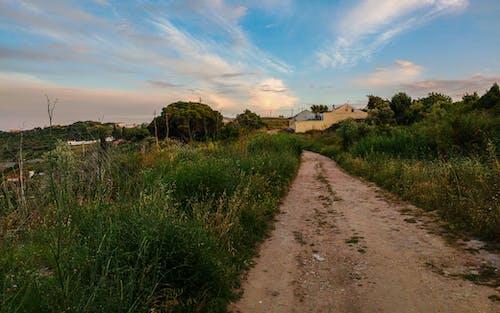 Immagine gratuita di alberi, cielo azzurro, erba, nuvole