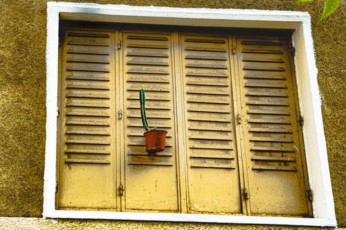kaktüs içeren Ücretsiz stok fotoğraf