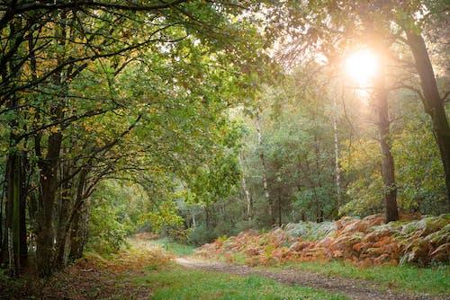 Free stock photo of fern, green trees, sun