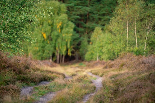 Free stock photo of green trees, heather, nature
