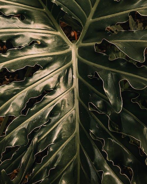 Photos gratuites de abstrait, arbre, art