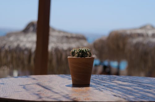 Green Plant in Brown Clay Pot on Brown Wooden Table