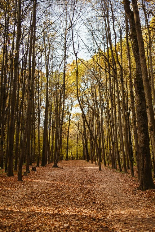 Deciduous Trees in a Forest