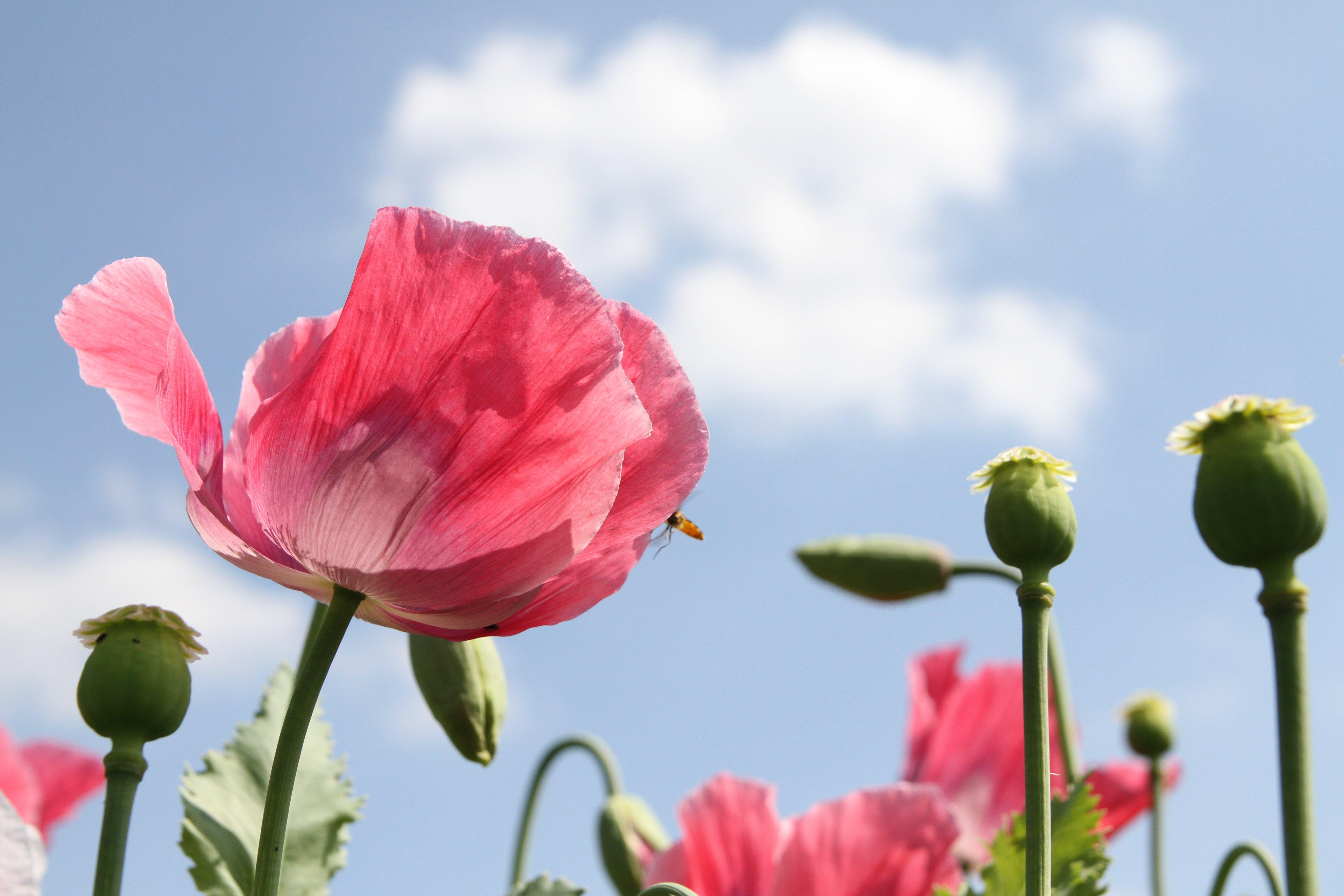 bloom, blooming, flower