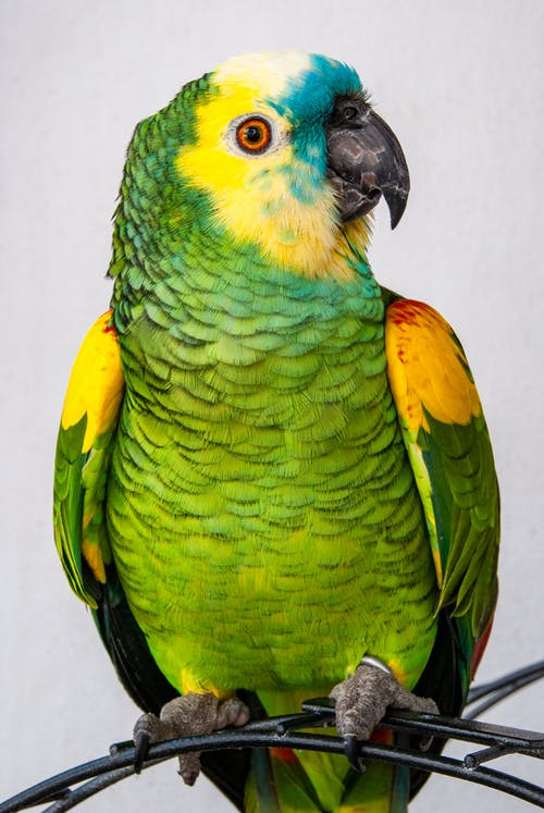 Green and Yellow Bird on White Surface