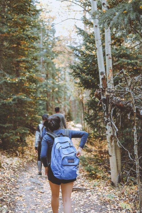 Back view faceless travelers with backpacks strolling along rural walkway in lush coniferous woods on early autumn day