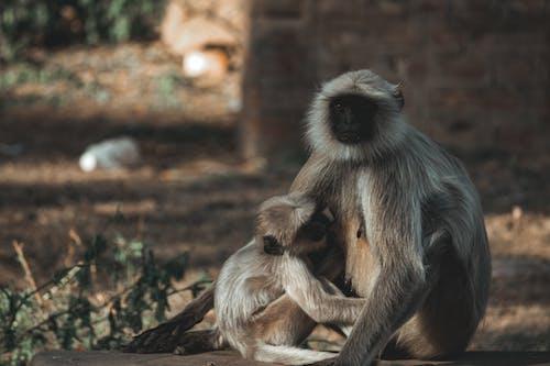 Monkeys in zoo in daylight