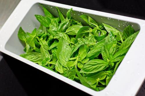 Fotos de stock gratuitas de albahaca, angulo alto, aromático