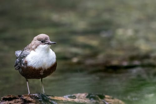 Brown and White Bird on Water