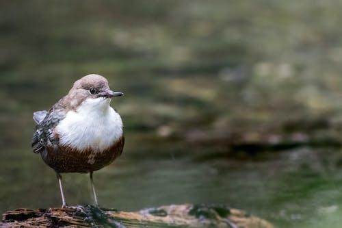 Immagine gratuita di acqua, acqua di fiume, animale