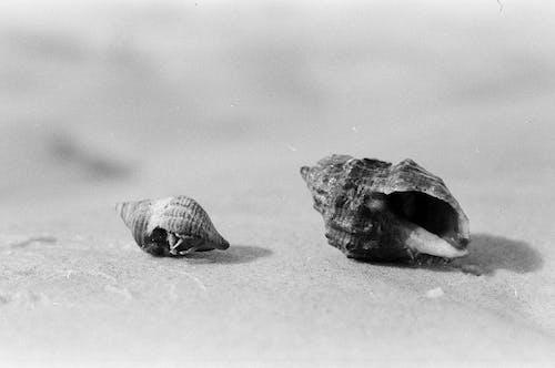 Fragile seashells on sandy coast