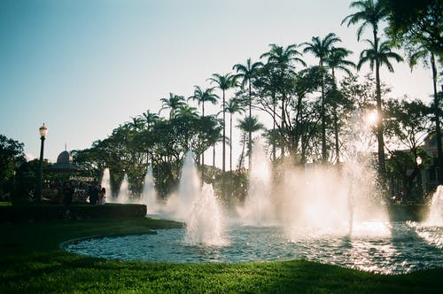 Exotic majestic garden with splashing water in fountains against row of tropical palms in sunlight